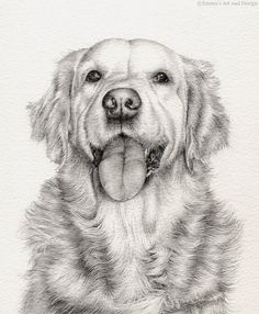 Golden Retriever - Mounted print of original pencil drawing