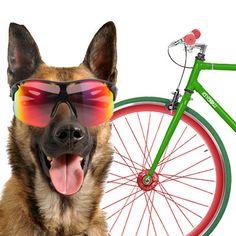 Ya no tenéis excusas para poneros en forma con vuestros #perros. Os contamos cómo hacerlo en el blog de #PiensoPet ¡A mover el esqueleto!