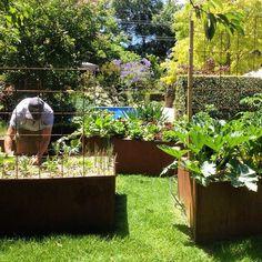 corten steel, melbourne garden from grounded gardens instagram