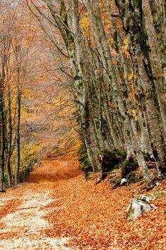 sentieri in autunno