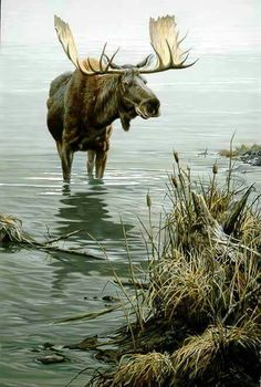 John Seerey-Lester - Silent Waters - Moose - This is one of more than works of art offered by ArtUSA, The World's Source for Collectible Art. Moose Deer, Bull Moose, Moose Hunting, Moose Art, Pheasant Hunting, Turkey Hunting, Archery Hunting, Wildlife Paintings, Wildlife Art
