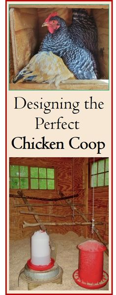 Thorough and organized, this guide will help you design the ultimate chicken coop: convenient for you, and spacious and comfortable for the birds. Covered in detail are 15 items, such as space, nest boxes, roosts, windows, runs, and more. Plenty of photos for ideas. Also a word on chicken runs and yards. Whether you keep a few birds or a larger flock, the important principles are the same.: