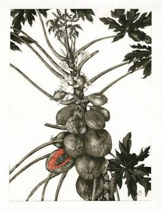 Monika E. Devries Gohlke - 'Carica papaya', hand-coloured Aquatint Etching