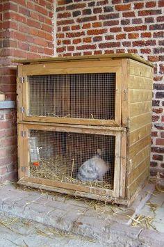 clapier et enclos pour lapins