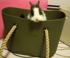 O bag-O bunny