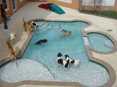 Swimming pool just for our fur babies! - dog