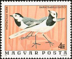 Sello: White Wagtail (Motacilla alba) (Hungría) (Birds from Hortobágy National Park) Mi:HU 3094 Mail Art, Stamp Collecting, Postage Stamps, Pet Birds, Royalty Free Images, National Parks, Stock Photos, Gallery, Crafts