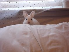 Bunny Is Almost Camouflaged - June 12, 2011