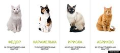 You'll need a mortgage for a sberbank cat