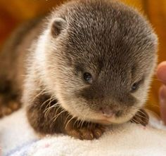 along with the bunny that will hop around my apartment, i'll take an otter, too, please.