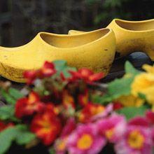 Alles grünt: Rein in die Clogs, raus in den Garten - im April gibt es viel zu tun!