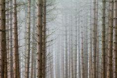 Image of Landscape Editions Volume Two - David Baker Ridge Trees