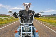 Né pour être sauvage grande photographie par DogtownArtworks