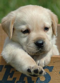 This adorable puppy you NEED in your life