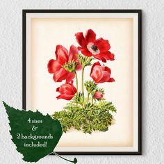 Botanical print Anemone flower Vintage prints Antique art