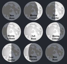 Did you ever wonder if the phase or Astrology sign the Moon was in at the time of your planting made a difference in your garden? Many people have made the connection, and written books regarding how certain crops or flowers are sturdier or better during certain moon phases, and when the Moon is in certain Astrology signs. Check out some of the examples I have written about here.