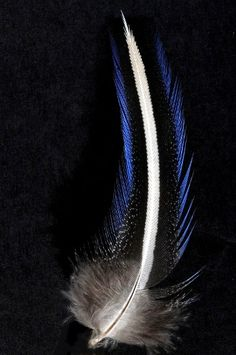 Pintade vulturine bord bleu - 8-10 cm - trait blanc naturel - Plumes.fr Feather Painting, Feather Art, Blue Feather, Feather Design, Bird Feathers, Eagle Feathers, Feather Crafts, Black N White Images, Natural World
