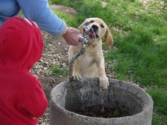 Summer might well be the most beloved season for most dogs but it can bring danger and even death to many, so have a safe and careful summer that you both can enjoy.  Here are some pointers at: www.pawsitivesolutions.org