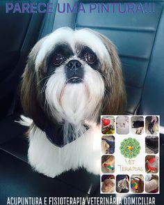 #animais #cães #seupetmerece #cachorro #acupunturaveterinaria #acupunturaétudodebom #veterinariaemdomicilio #vetterapias  #veterinários #draflaviaoliva #vemparavetterapiasvocêtambém  #chegaderemedios
