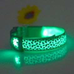 Buy Leopard Print LED Collar Luminous Puppy Necklace Pet Decorative Props - Green - 2240753435 and More Dog Supplies Enjoy up to off. Nylons, Pets Online, Led Dog Collar, Dog Bag, Dog Safety, Cat Collars, Dog Harness, Dog Leash, Pet Clothes