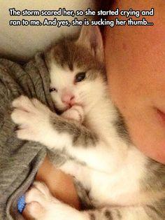 Comfort all the kitties!