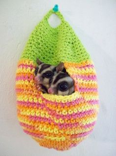 Crochet Stuff Bears crochet this for your pet sugar glider - Many of us have adored pets – dogs, cats, birds, etc. Many of us like to crochet for our own pets and for rescue centers such as the Humane Society. Small afghans are great for the dogs at … Sugar Glider Pouch, Sugar Glider Baby, Sugar Gliders, Hamsters, Rodents, Crochet Pouch, Crochet Bags, Crochet Gifts, Sugar Bears
