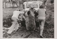 Land Rover Postcard, One can only hope no bears (or Land Rovers) were injured during this ad campaign.