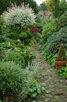 Stone garden pathway to. Design Azul, Landscape Design, Garden Design, The Secret Garden, Garden Cottage, Dream Garden, Garden Path, Garden Villa, Cacti Garden