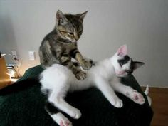 Kitten Massage Therapy.