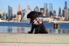 The Flannel Snap on Dog Bandana Scarf in Uptown Navy Plaid