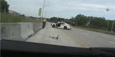 Local animal rescuer and SQ shut down highway in order to save ducks