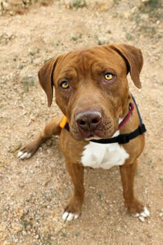 Adoptable Dog: Quincy