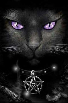 Black witch cat