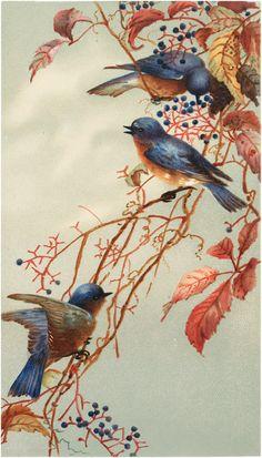 Vintage Bluebirds on Blueberry Branch Image!