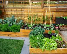 Small Backyard Veggie Garden Backyard Landscaping Ideas, Green Lawn And Raised Bed Garden Design 2017 Vegetable Garden Planning, Backyard Vegetable Gardens, Veg Garden, Vegetable Garden Design, Garden Landscaping, Outdoor Gardens, Landscaping Ideas, Garden Beds, Patio Ideas
