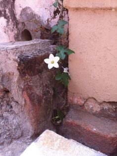 white blossom reaching through a crack in the wall