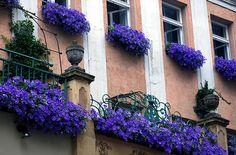 purple flower boxes