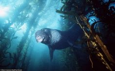 Rare creatures found in the deep sea - Xinhua   English.news.cn