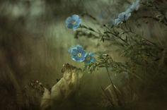"""#FLOWER #Fleur Vote ♡ J'aime sur """"Couleurs de Lecture"""" par Céline RIGAL en suivant le lien : http://on.fb.me/1qRuge6"""