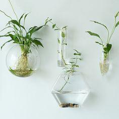 Sechskant-Wand-Terrarien / / indoor Wand Blase bowl //cone Wand Aufhänger Pflanzgefäße / / Oval Glas Wand Vase / / TV-Wand dekorieren / / house-Verzierung