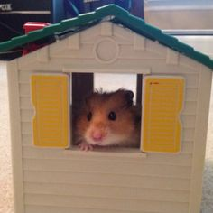 New Hamster Home