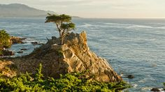 There is perhaps no other scenic road trip in America that calls for a convertible more than a drive on California�s dramatic coastal roads. With the wind whipping through your hair, cruise along the 17-Mile Drive on Pacific Coast Highway that curves along the coast from Pacific Grove to Carmel with jaw-dropping ocean views. Just don�t forget your Hollywood-esque shades.