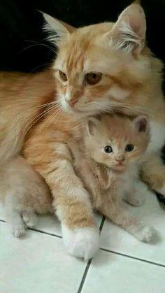 Mamma gatto con il suo gattino.