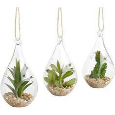 Pier 1 Imports Green Faux Succulent Glass Ornament Set ($25) ❤ liked on Polyvore featuring home, home decor, floral decor, plants, filler, green, faux outdoor trees, glass succulent terrariums, ornamental trees and artificial trees home decor