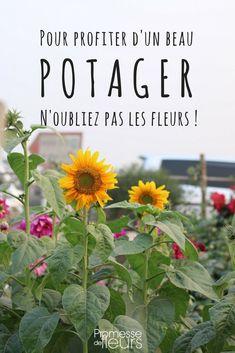 Les fleurs au potager méritent une large place, surtout s'il est bio, car elles sont aussi utiles que décoratives.