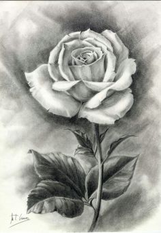 45 beautiful flower drawings and realistic color pencil draw Easy Flower Drawings, Beautiful Flower Drawings, Pencil Drawings Of Flowers, Flower Sketches, Pencil Art Drawings, Realistic Drawings, Art Drawings Sketches, Rose Drawings, Flower Sketch Pencil