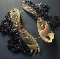 Crystallized moths... Beautiful