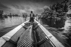 Assunto: Manejo de Pirarucu na Reserva de Desenvolvimento Sustentável Mamirauá Local: Maraã - AM Data: 11/2014 Autor: André Dib