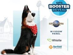 Amazon Card, 20 Year Anniversary, Online Contest, Online Sweepstakes, Win A Trip, Universal Studios, Rooster, Wisdom, Health