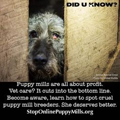 Imagine living with a bladder infection or injured eye for years. Puppy mill dogs do. They get no vet care, it cuts into profits. Rescue Dogs, Animal Rescue, First Aid Tips, Hurt Locker, Greenfield Puppies, Buy Puppies, Stop Animal Cruelty, Puppy Mills, Animal Facts
